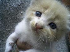 Machito en adopción/Adoptado/OLIVER