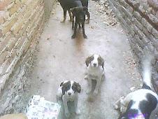 Cachorritos de 4 meses en apuros/ADOPTADOS