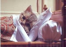 Mi gato está enfermo ;-(