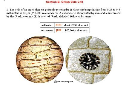 Aspire to inspire before you expire animal cell and plant cell ccuart Choice Image