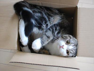 http://1.bp.blogspot.com/_4Cb_t7BLaIA/TCY3jyIx4SI/AAAAAAAAAbw/K-Ey_u36y8o/s400/maru+the+japanese+cat.jpg