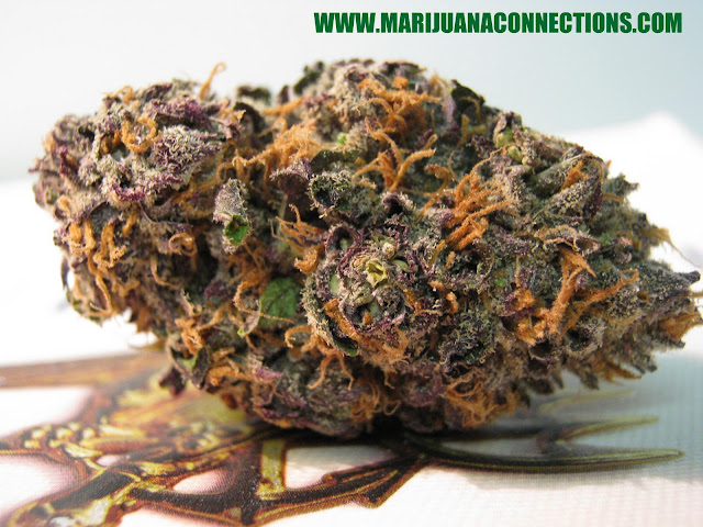 Grape Stomper Marijuana Strain