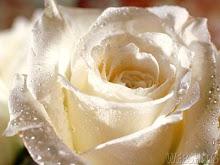 Rosas...