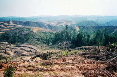 Foto Riau - Illegal Logging Area in Riau