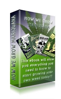 How we grow marijuana lesson 2 constant light harvest a modified shed with fiberglass or plastic windows on the roof will provide a great strategy for combating energy costs besides deterring pests kids and fandeluxe Ebook collections