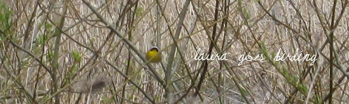 Laura Goes Birding