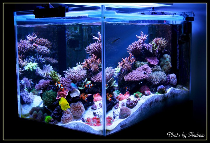 Hobby craft & science fiction: Our 130 Gallons Reef Tank (1)