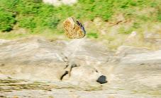 Piedra voladora