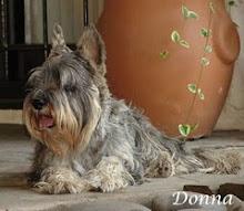 Adorable Donna
