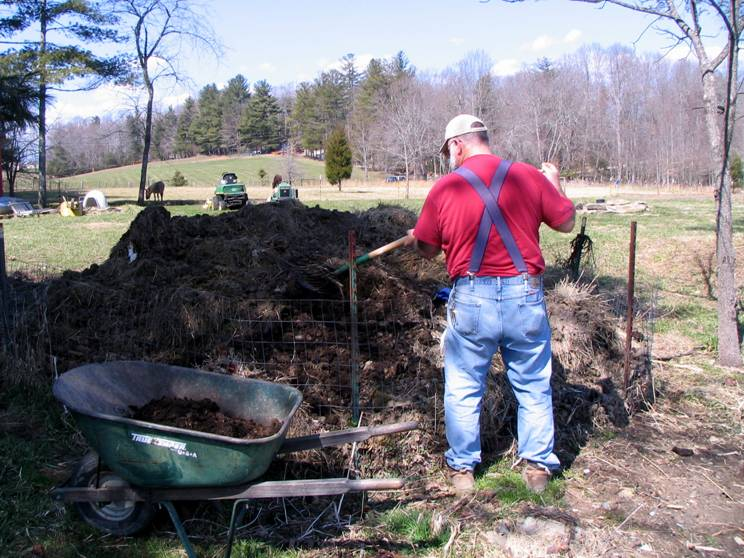 gardener gathering aged horse manure to add to his garden