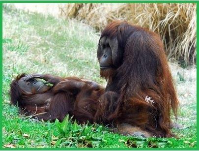 обезьянки картинки прикольные мультяшные