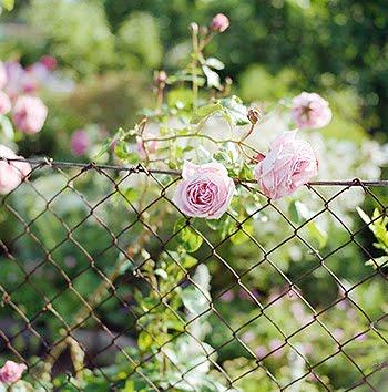 Flores para alegrar o seu dia.