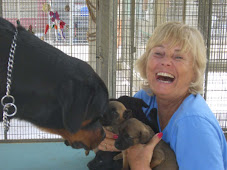 Me at the animal shelter in Bonaire