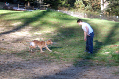 Eclipse running towards Alex at the dog park. Alex is bent down slightly with his arms getting ready to embrace Eclipse