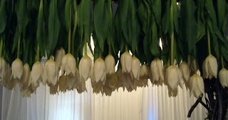 Closeup of Tulip tree
