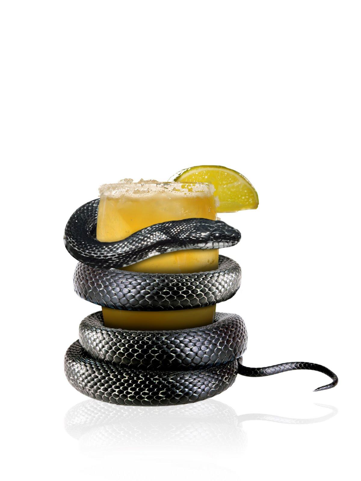 http://1.bp.blogspot.com/_4KxmFp2OOHI/S83uj3kON8I/AAAAAAAAJqg/OlHqawCS6Lw/s1600/Black+Mamba+Snake.JPG