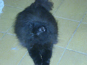 Fufflycats Phyetra