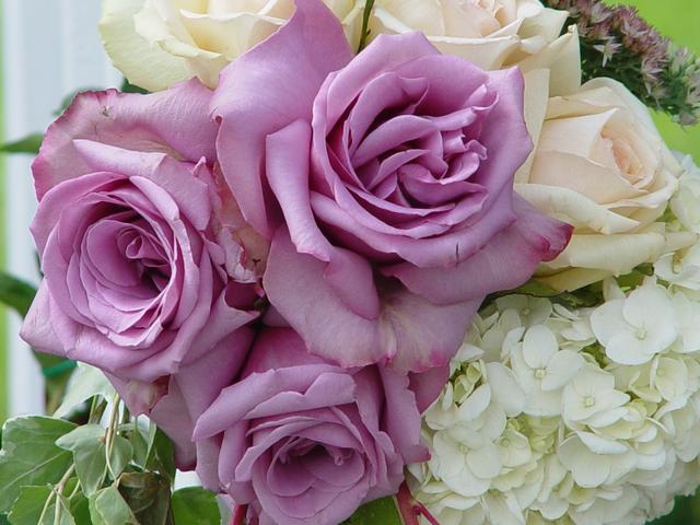 [Flowers_7.jpg]