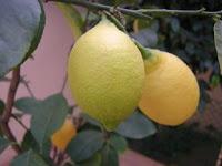 limones en Graceland