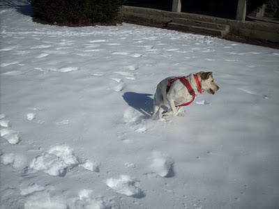 Cass jugando en la nieve