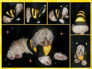 perro disfrazado abeja