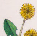 painted dandelions on fabric
