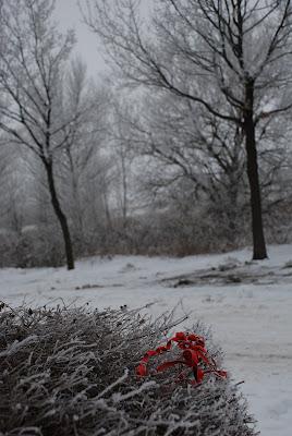 Photo: a Touch Of Red 2 © Mariann Lennert