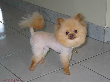 animals' world cool dog hairstyles