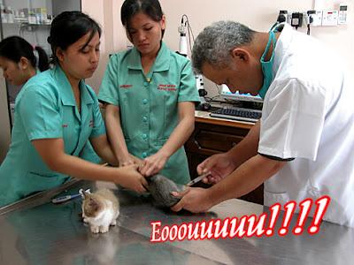 bukan doktor veterinar: Penyakit Lazim pada kucing
