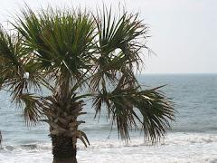 Pavilion Palms