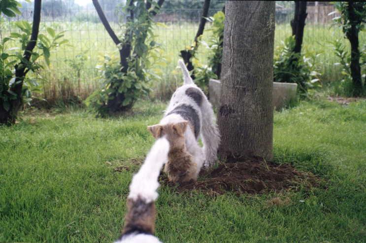 Addestramento ed educazione dei cuccioli e del cane adulto for Talpe in giardino