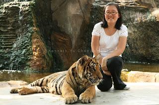 tiger temple, thailand, kenneth yu chan photography, kenneth chan photography