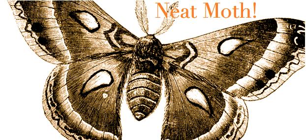 Neat Moth!