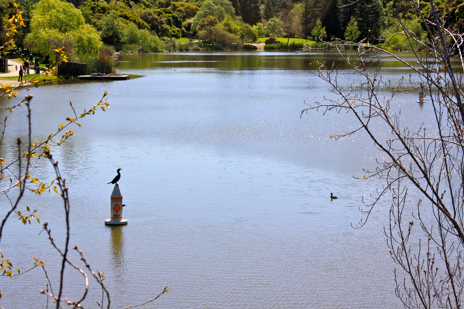 Oakland daily photo the other oakland lake for Lake temescal fishing