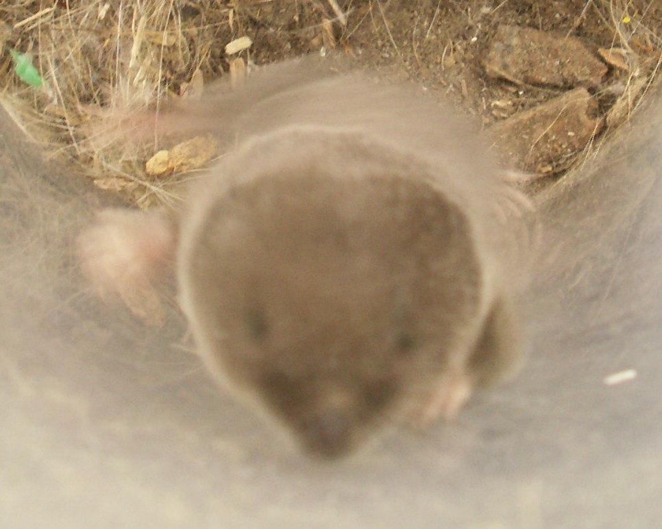 [mole+in+vaccum+028.JPG]