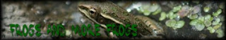 Frog Breeders list. Over 100 Dart Frog Species and Morph Photos. Many other Frog Species and Morph Photos, and many Videos of Frogs calling, and photos. Lots to look at. Come and take a look.