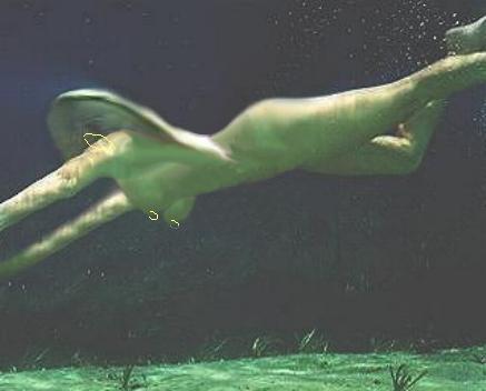 AbbySwimming Selma Blair Nude