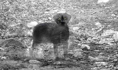 Cane fantasma
