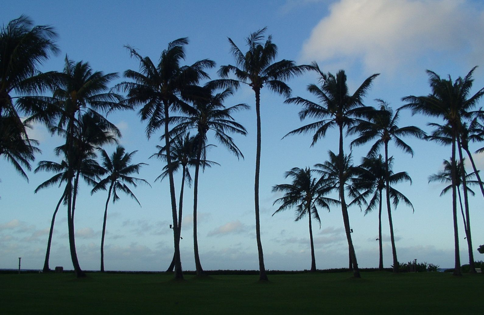palm trees,Kiahuna Beach,Kauai,Hawaii