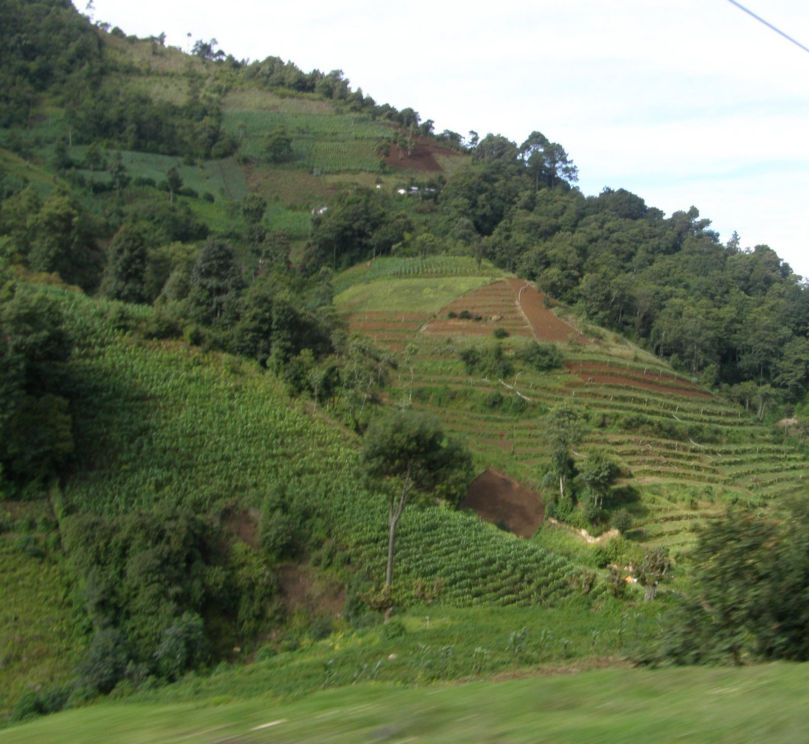 Guatemala farm fields