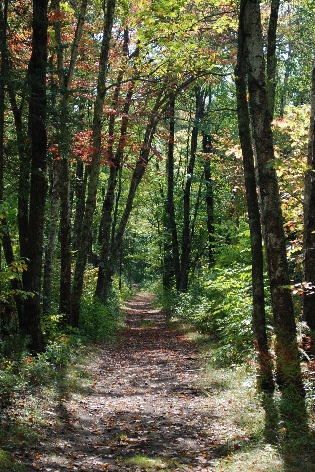 minnesota woods, quarry loop, banning state park
