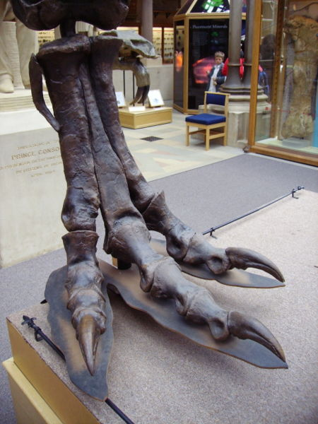 [T._rex_right_hind_foot_(lateral)]
