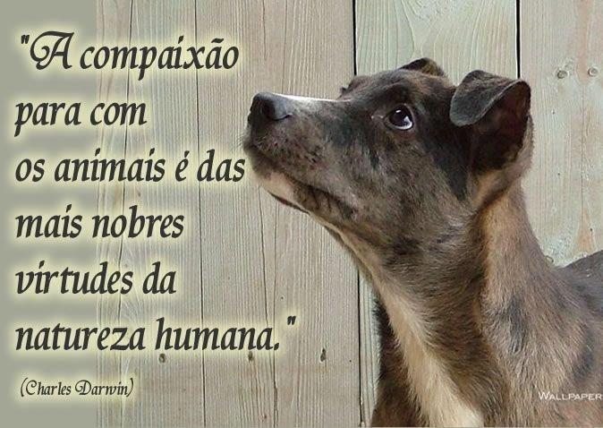 DELEGACIA DE PROTEÇÃO AOS ANIMAIS