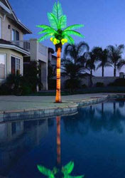 Lighted Tiara palm tree