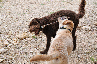 Bob and Alfie sharing a stick, they are facing each other and walking forward so it made bob's head flip funny so it is almost twisted and upside down