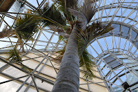This picture is taken of a tree looking up from the base, it was to show how tall the big spiral building was