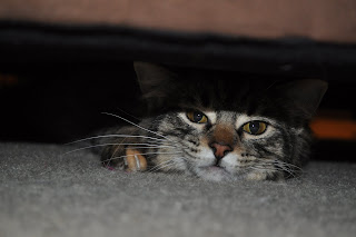 The cat under the couch, all you can see is her face and her right front paw next to it. She looks slightly peeved. You can see her orange toe and her soft paws on in.