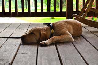 Bob sleeping on the wooden porch outside