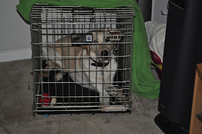 Bob in his old cramped crate, he just barely fits in it and his legs are all folded up, he can't stretch out