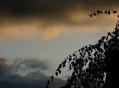 la photo du 22 octobre 2009 (522)